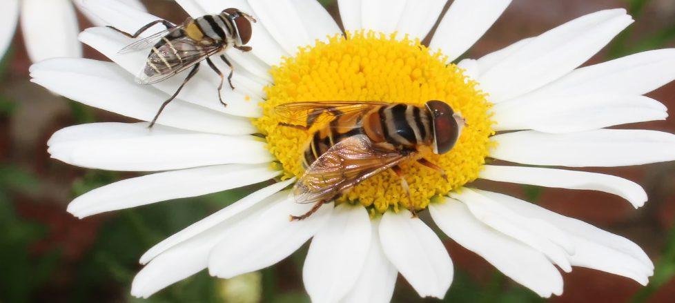Exposição fotográfica na USP mostra a importância dos insetos na natureza
